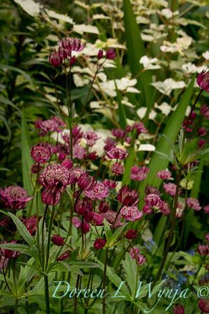 Northwest Garden Nursery__014
