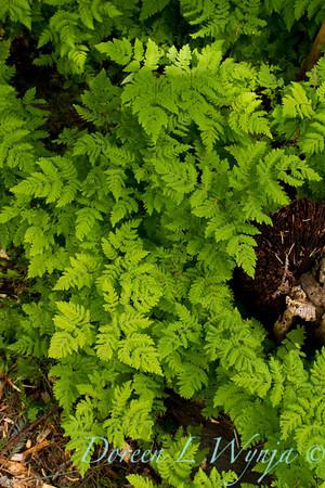 Northwest Garden Nursery__027