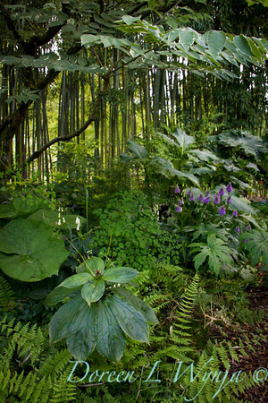 Northwest Garden Nursery__038