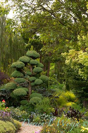 Northwest Garden Nursery__082