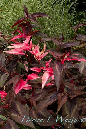 Northwest Garden Nursery__049