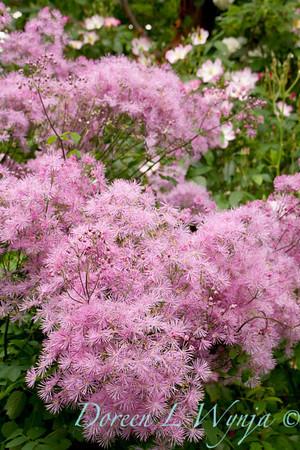 Northwest Garden Nursery__007
