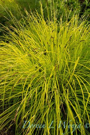 Northwest Garden Nursery__057