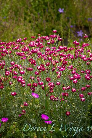 Northwest Garden Nursery__048