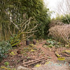 Winter landscape path N of bamboo_3745