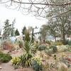 Winter landscape chaparral garden toward barn_3778