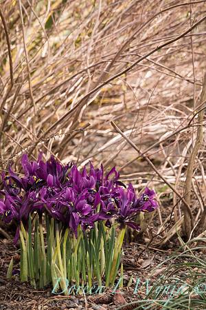 Northwest Garden Nursery Feb_1095