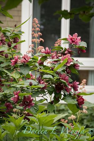 Ann and Jim's Garden_147