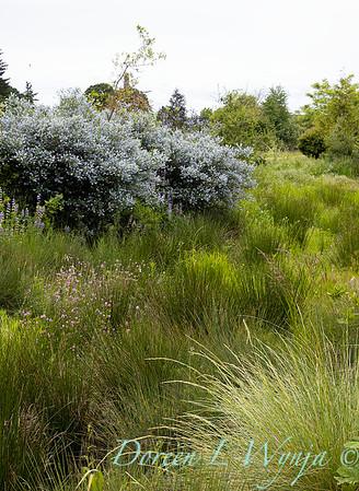 Argyle landscape_1201
