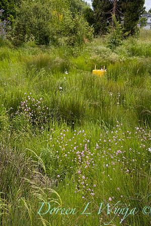 Argyle landscape_1217