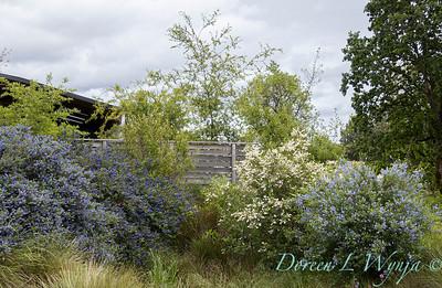 Argyle landscape_1195