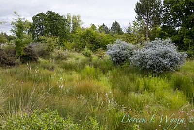 Argyle landscape_1206