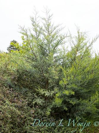 Argyle landscape_1220