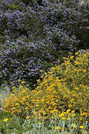 Argyle landscape_1163