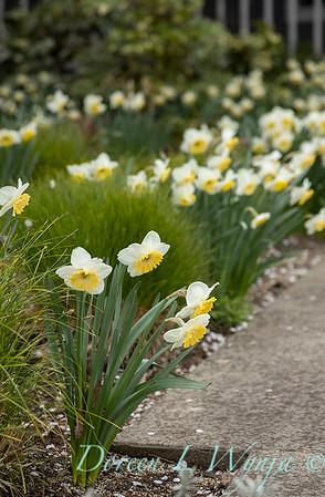 Argyle spring garden_1141