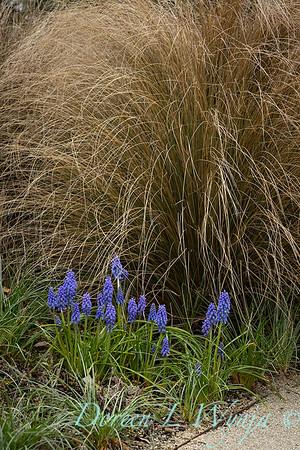 Argyle spring garden_1092