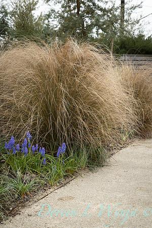 Argyle spring garden_1090