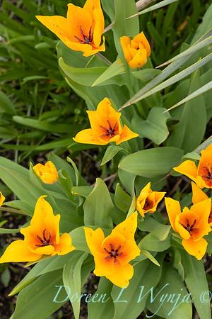 Argyle spring garden_1106