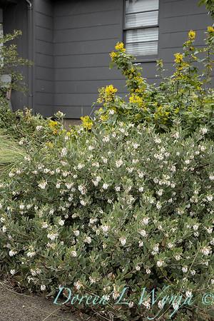 Argyle spring garden_1148