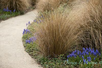 Argyle spring garden_1108