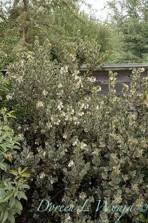 Argyle spring garden_1085