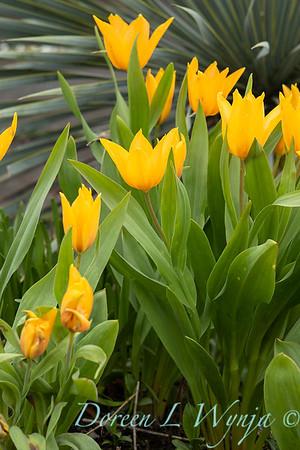 Argyle spring garden_1095