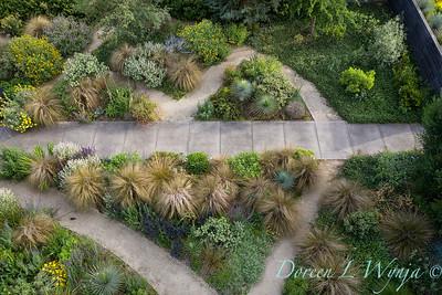 Argyle garden - Dragonfly_2393