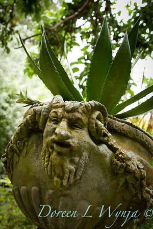 Aloe in urn_003