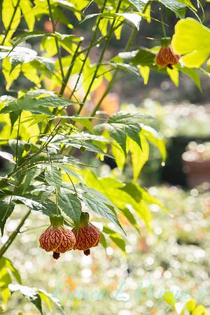 Dietrick fall garden_2031