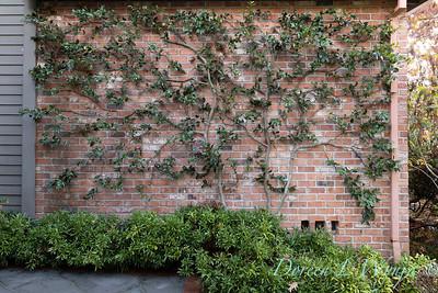 Dietrick fall garden_2023