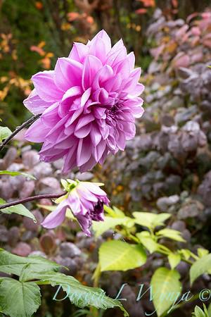 Dietrick fall garden_2028