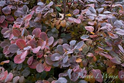 Dietrick fall garden_2002