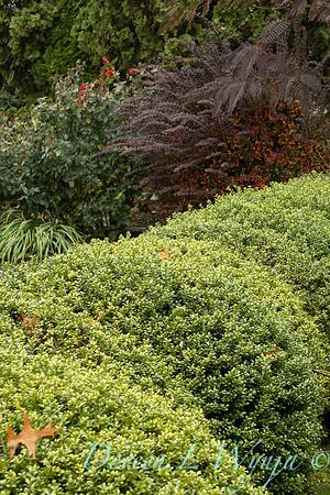 Dietrick fall garden_2035
