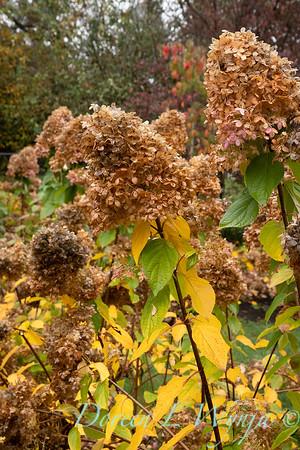 Dietrick fall garden_2047