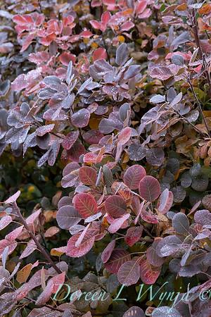 Dietrick fall garden_2003