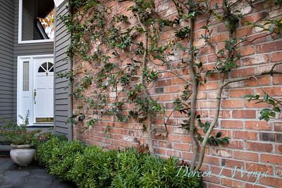 Dietrick fall garden_2020