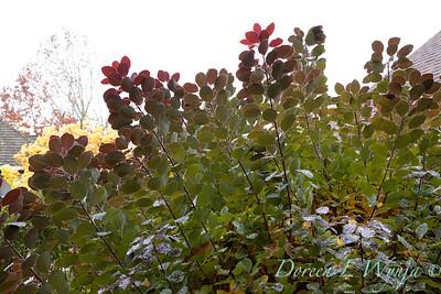 Dietrick fall garden_2006