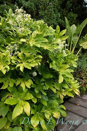Dietrick fall garden_2030