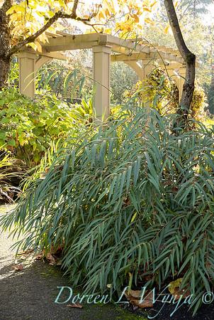 Dietrick fall garden_2024