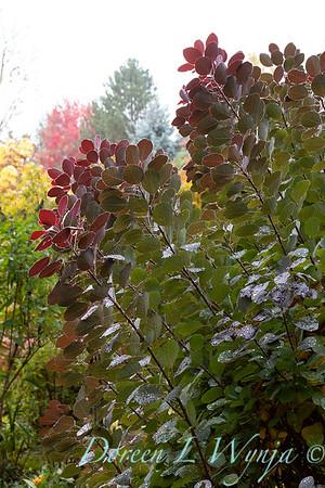 Dietrick fall garden_2005