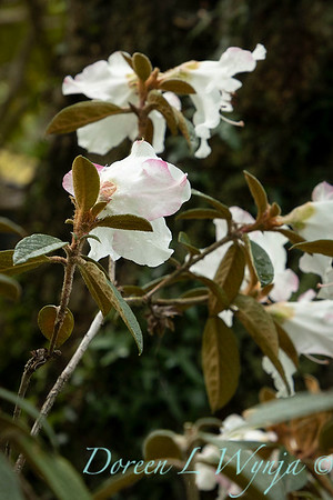Spring time_1637
