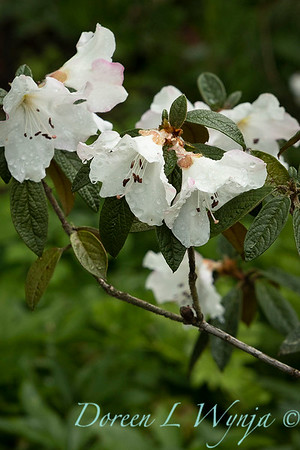Spring time_1638