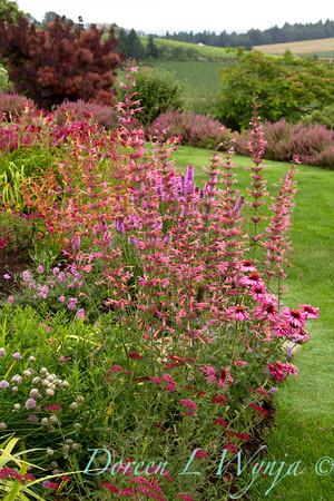 Agastache Summer Breeze Cottage Garden_012