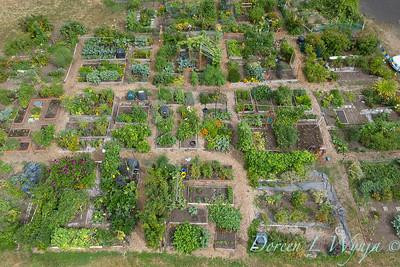 Aerial view Fulton Community Garden_1854