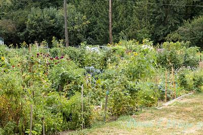 Fulton Community Garden_1802