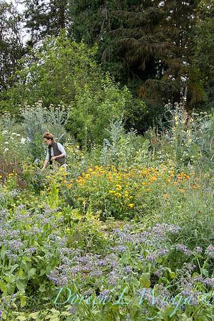 Leslie - herb bundles_2005