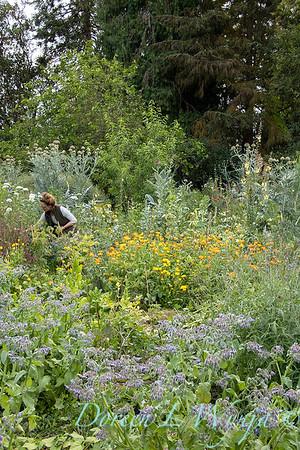 Leslie - herb bundles_2007