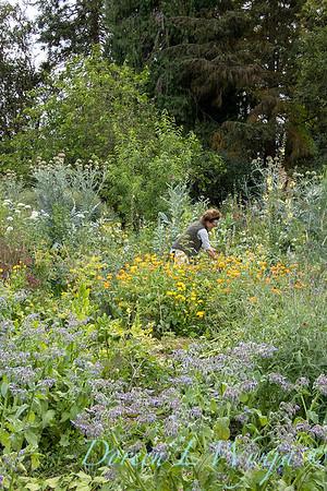 Leslie - herb bundles_2003