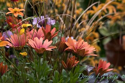 Ernst Garden of colors_2022