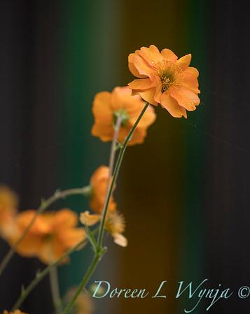Ernst Garden of colors_2033